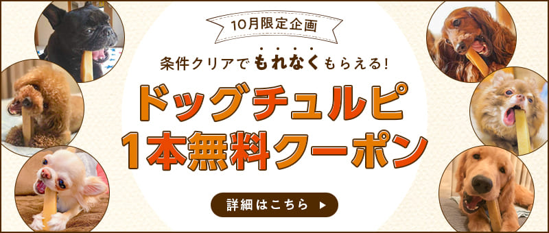 ヒマラヤ産ヤクミルクチーズ使用ドッグチュルピ1本無料クーポン