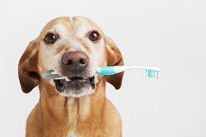 愛犬の歯磨き・デンタルケア