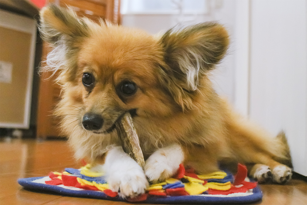 犬がおやつを食べている画像