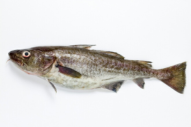 北海道産 真鱈の皮 100g