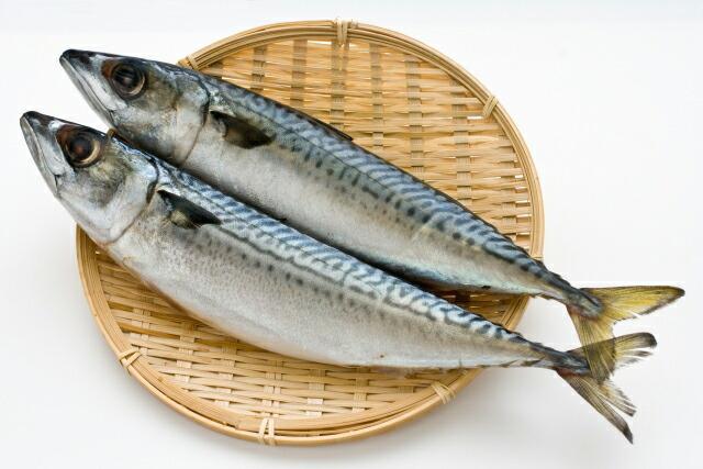 千葉県銚子産 サバレトルト 100g